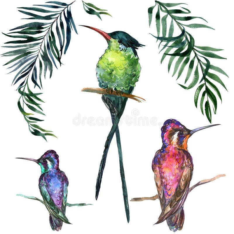 Mooie kleurrijke tropische vogels die die op takken zitten op witte achtergrond worden geïsoleerd royalty-vrije illustratie