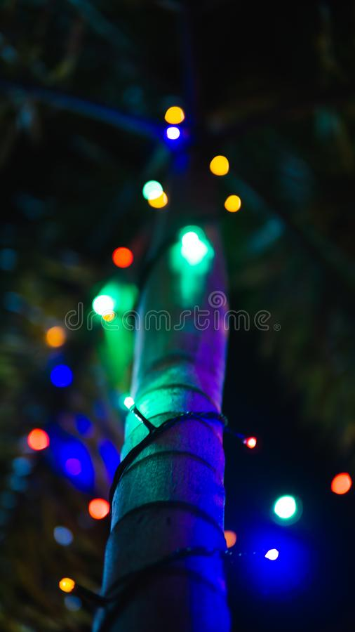 Mooie kokospalm met geleid licht royalty-vrije stock foto
