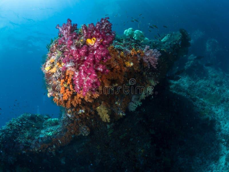 Mooie koraalriffen in Raja Ampat, Indonesië royalty-vrije stock afbeelding