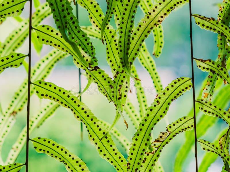 Mooie Kunstmatige bladeren die voor glasvenster hangen om de koffiewinkel te verfraaien royalty-vrije stock foto