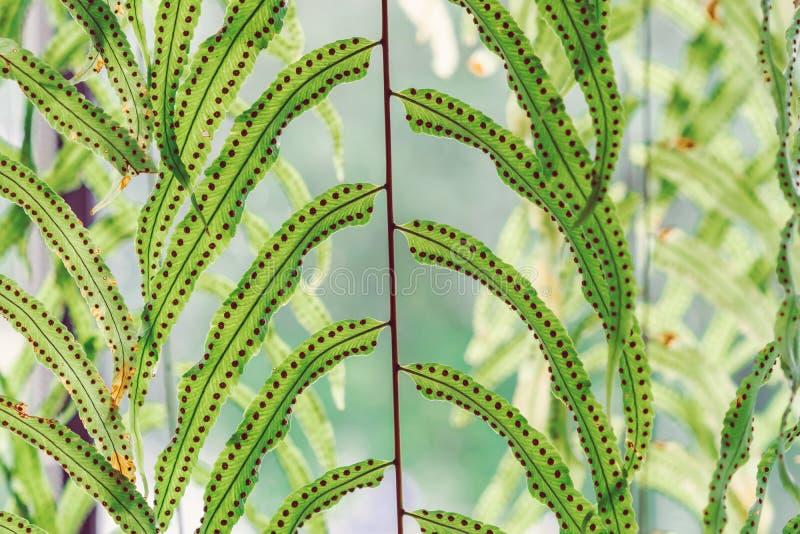 Mooie Kunstmatige bladeren die voor glasvenster hangen om de koffiewinkel te verfraaien stock afbeeldingen