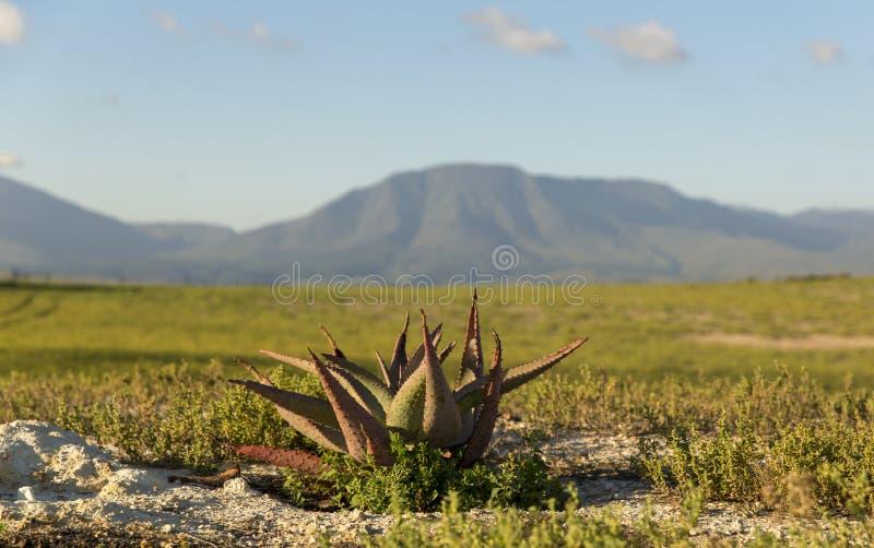 Mooie landbouwbedrijfvallei in Zuid-Afrika stock foto