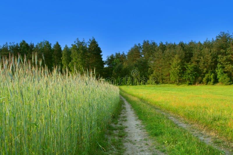 Mooie landelijke scène stock afbeelding