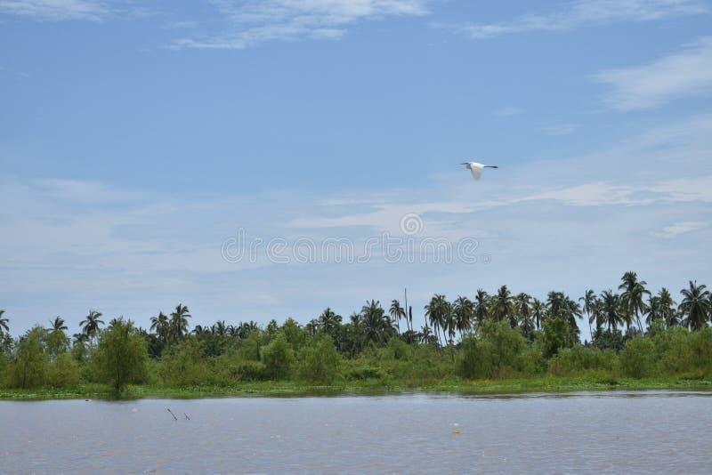 Mooie landschap van de vogel het vliegende trog royalty-vrije stock foto
