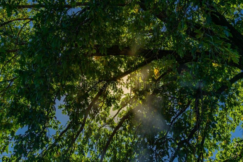 Mooie landschappen van Rusland Het gebied van Rostov Kleurrijke plaatsen Groene vegetatie en rivieren met meren en moerassen Boss stock afbeeldingen