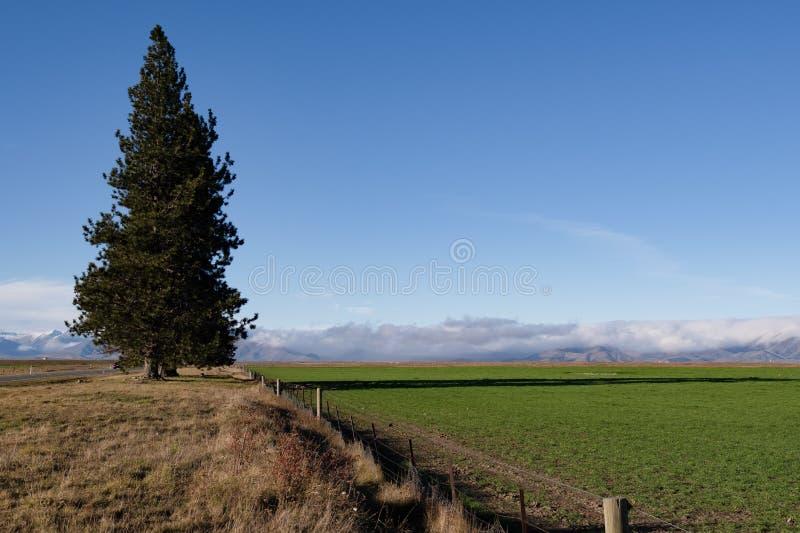Mooie landschapsmening van groen gebied en grote pijnboomboom met bergachtergrond in Zuid-Nieuw Zeeland royalty-vrije stock afbeelding