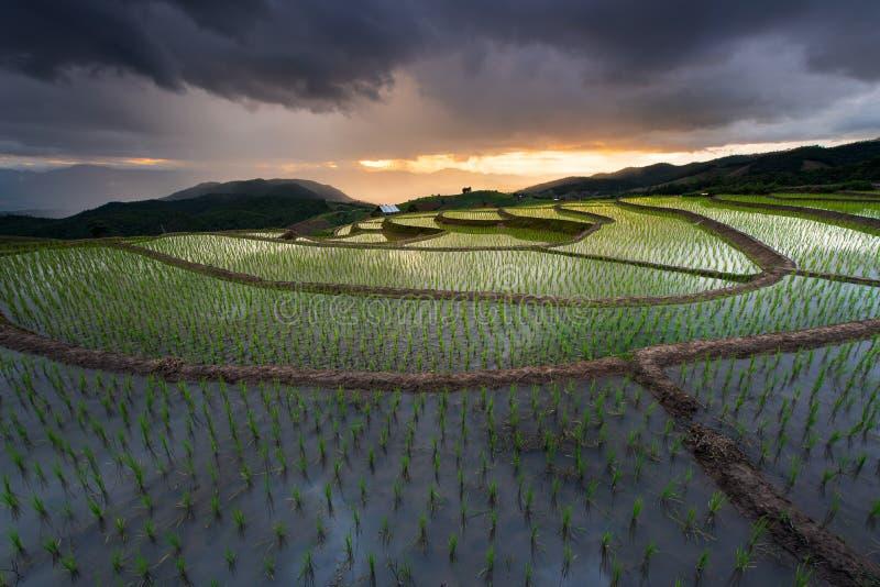 Mooie landschapspadievelden op terrasvormig van Verbodspa Bong Piang in het regenachtige seizoen, Chiangmai, Thailand stock afbeelding