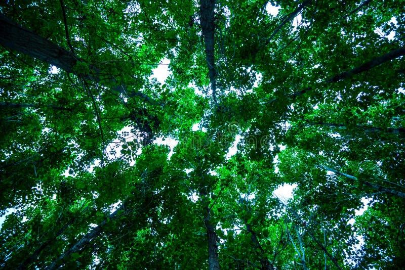 Mooie lange bomen in wildernis stock foto's