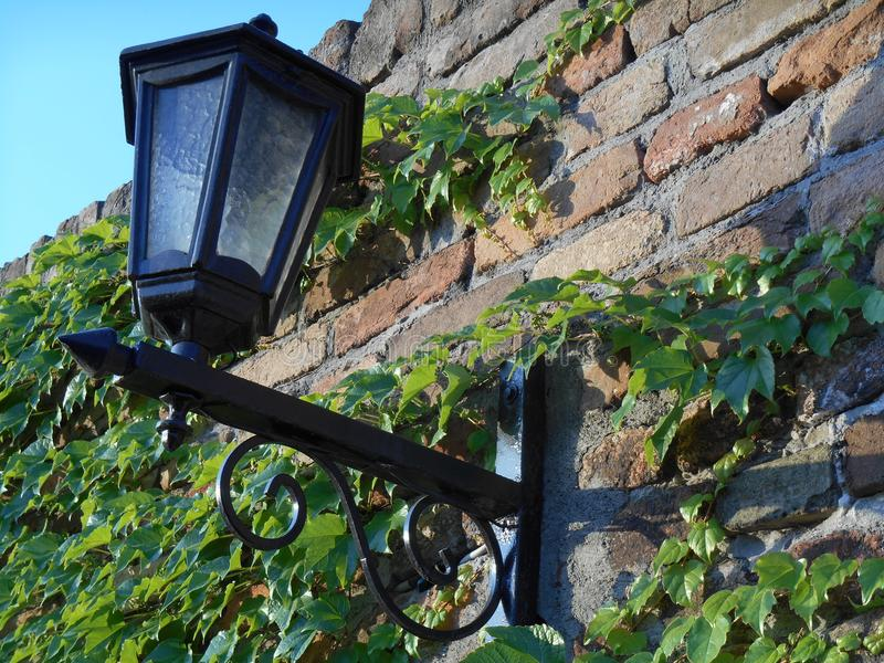Mooie lantaarn op bakstenen muur met groene klimopbladeren stock foto