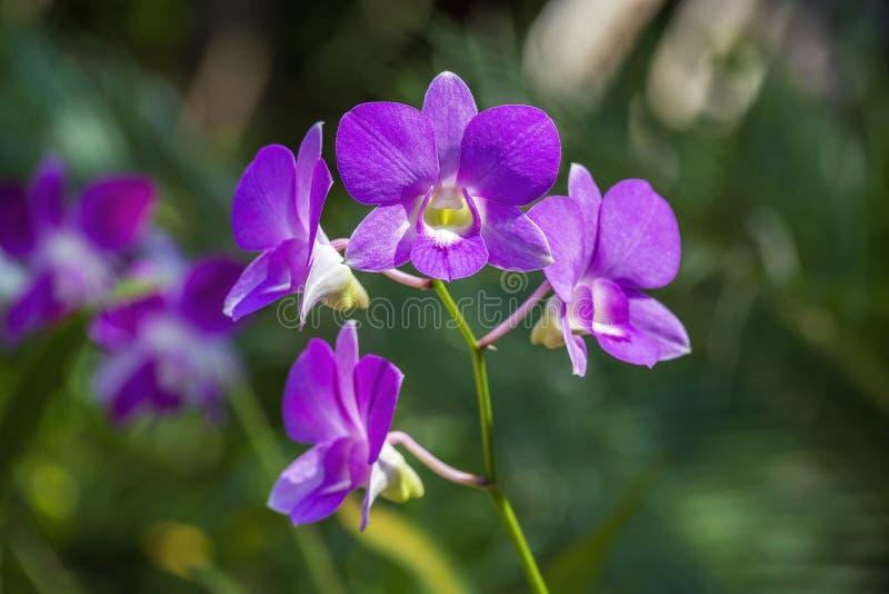 Mooie lilac roze orchidee?n op de groene achtergrond van bladeren natuurlijke voorwaarden Sluit omhoog, in openlucht, aardconcept stock foto's