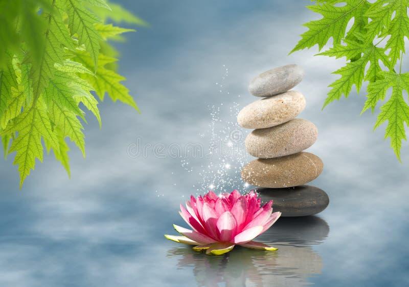 mooie lotusbloembloem op waterclose-up stock afbeeldingen