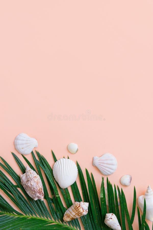 Mooie luchtige groene palmblad witte overzeese shells op achtergrond van de pastelkleur de roze muur De zomer tropisch zeevaart c royalty-vrije stock afbeelding