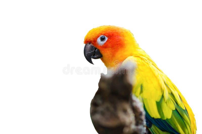 Mooie macow die zich op tak bevinden stock foto