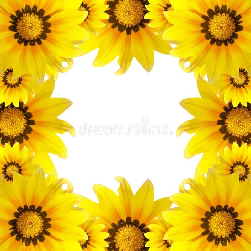 Mooie macrobloem, zonnebloemachtergrond royalty-vrije stock afbeeldingen