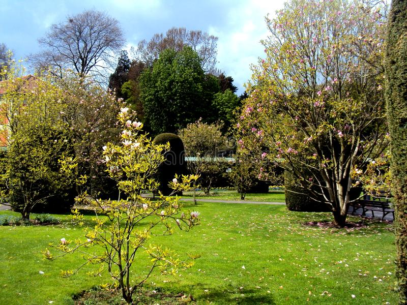 Mooie magnoliabomen in formele tuin in openbaar park in de lente in Stuttgart, Duitsland, Europa royalty-vrije stock afbeelding