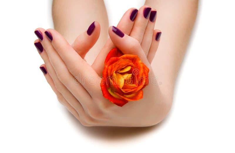 Mooie manicure stock foto