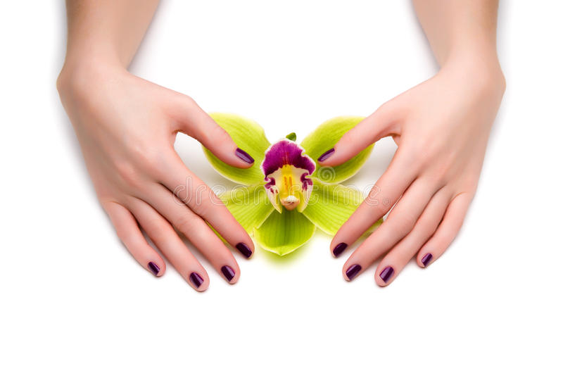Mooie manicure stock fotografie