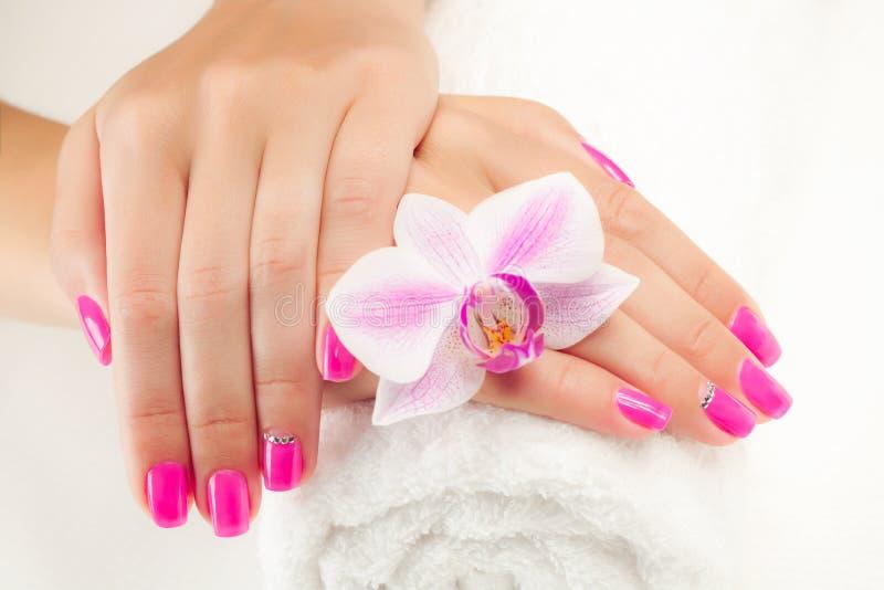Mooie manicure met roze orchidee op het wit stock afbeeldingen