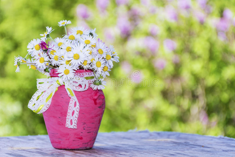 Mooie margrietenbloemen in roze vaas met lint stock foto's
