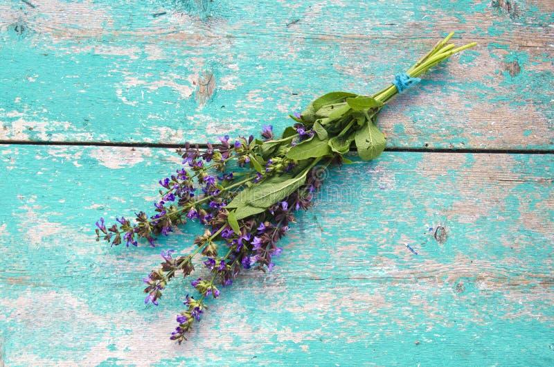 Mooie medische kruid wijze (Salvia-officinalis) bos royalty-vrije stock afbeeldingen