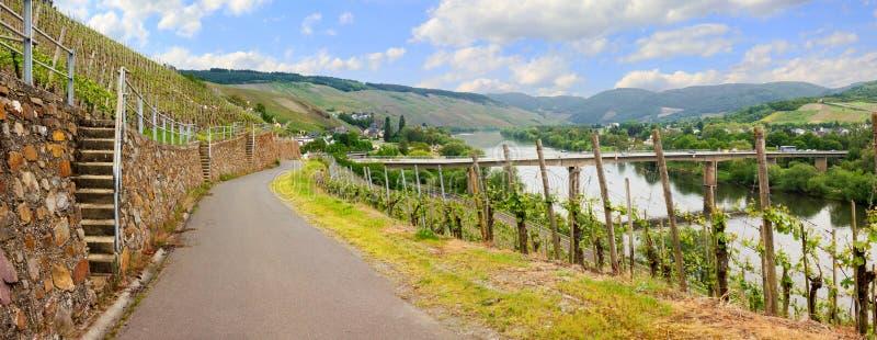 Mooie mening aan wijngaarden bij de rivier van Moezel stock afbeelding