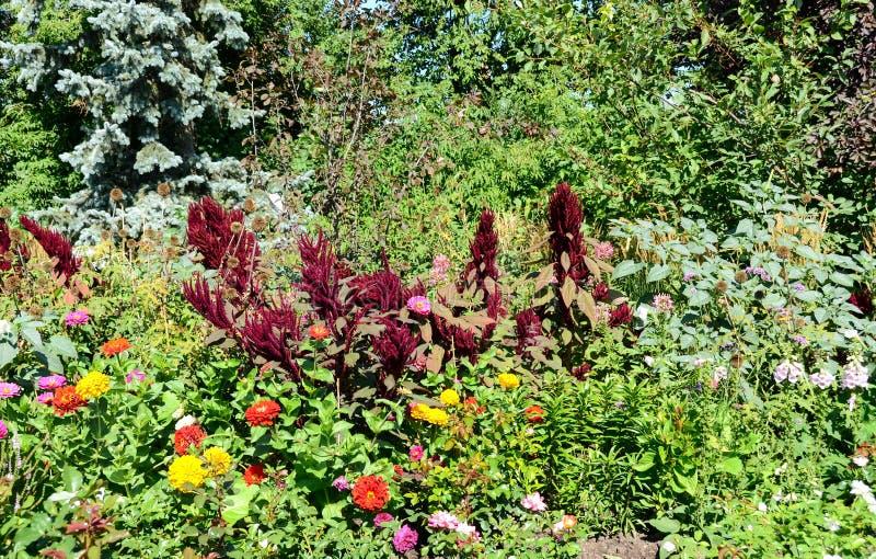 Download Mooie Mening Bij Kleurrijke Bloemen Stock Afbeelding - Afbeelding bestaande uit gebladerte, kleuren: 29510971