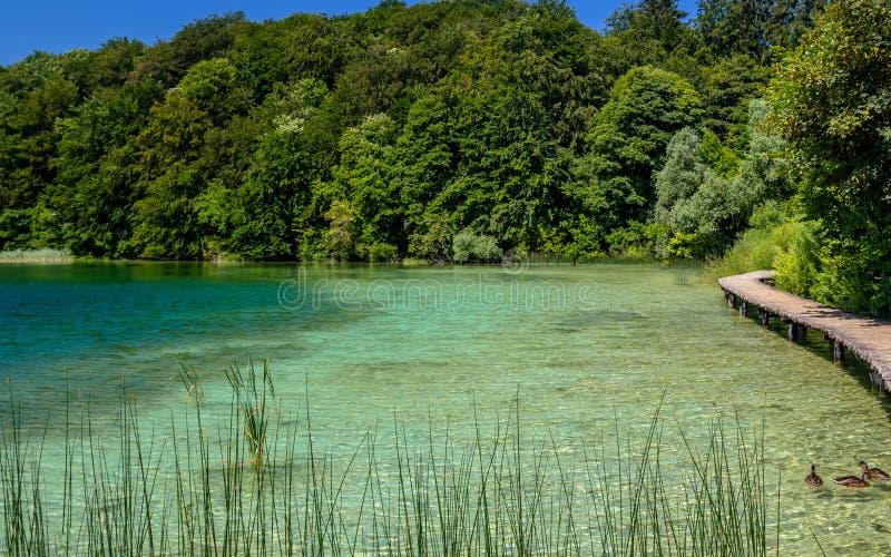 Mooie mening in Plitvice-Meren Nationaal Park Kroatië royalty-vrije stock fotografie
