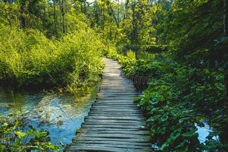 Mooie mening in Plitvice-Meren Nationaal Park Kroatië royalty-vrije stock foto