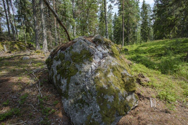 Mooie mening van aardlandschap Groene installaties en bosbomen achter reusachtige grijze die rots met grijs mos wordt overwoekerd stock foto