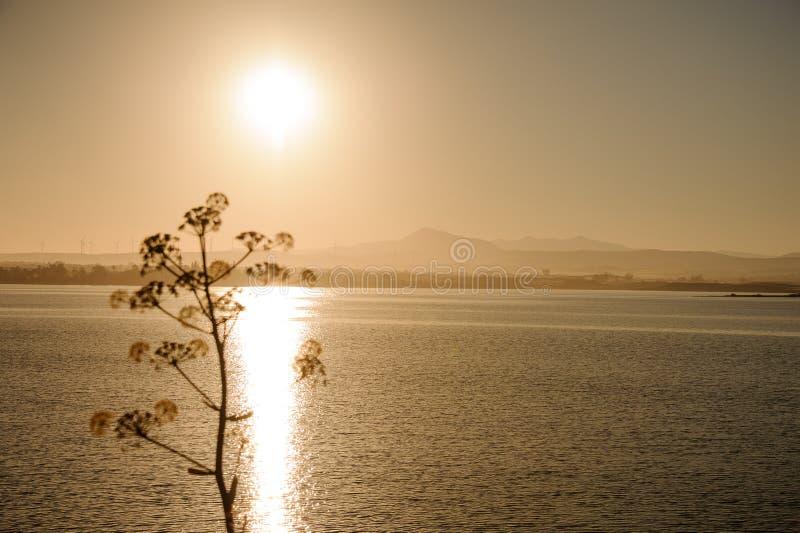 Mooie mening van boom met overzees en zonsondergang stock foto's