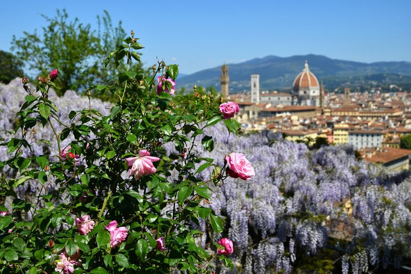 Mooie mening van de beroemde Kathedraal Santa Maria del Fiore in Florence met purpere het bloeien wisteria en Roze Rozen royalty-vrije stock foto's