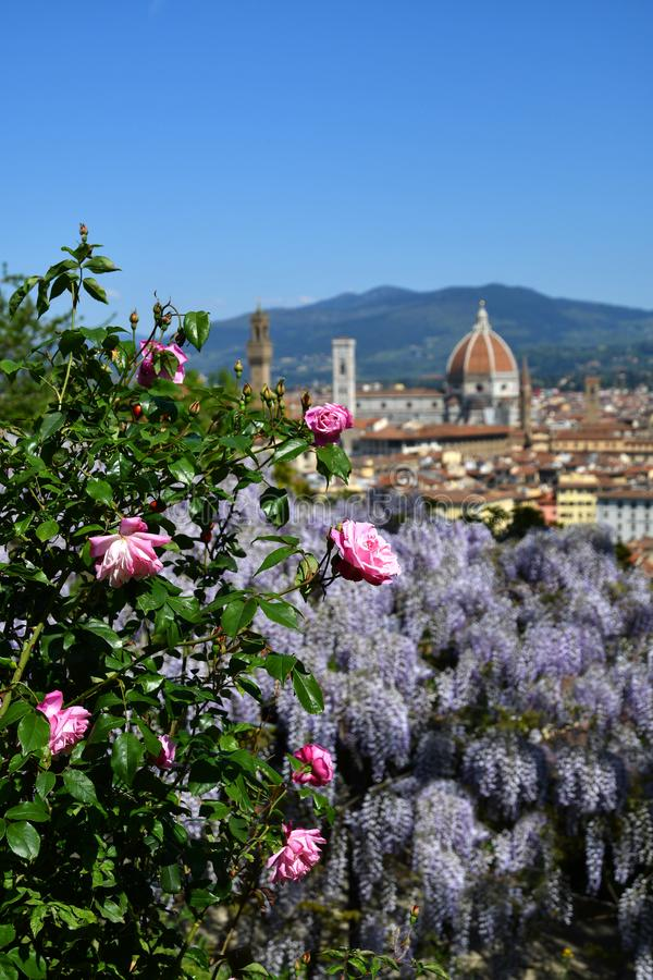 Mooie mening van de beroemde Kathedraal Santa Maria del Fiore in Florence met purpere het bloeien wisteria en Roze Rozen stock foto's