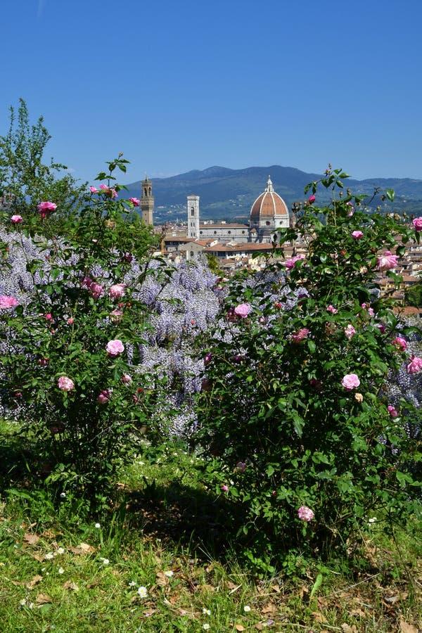 Mooie mening van de beroemde Kathedraal Santa Maria del Fiore in Florence met purpere het bloeien wisteria en Roze Rozen royalty-vrije stock afbeelding