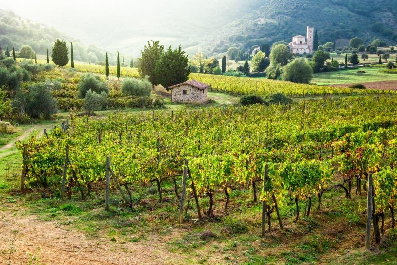 Mooie mening van de zonsondergang over de wijngaarden in Toscanië royalty-vrije stock foto's