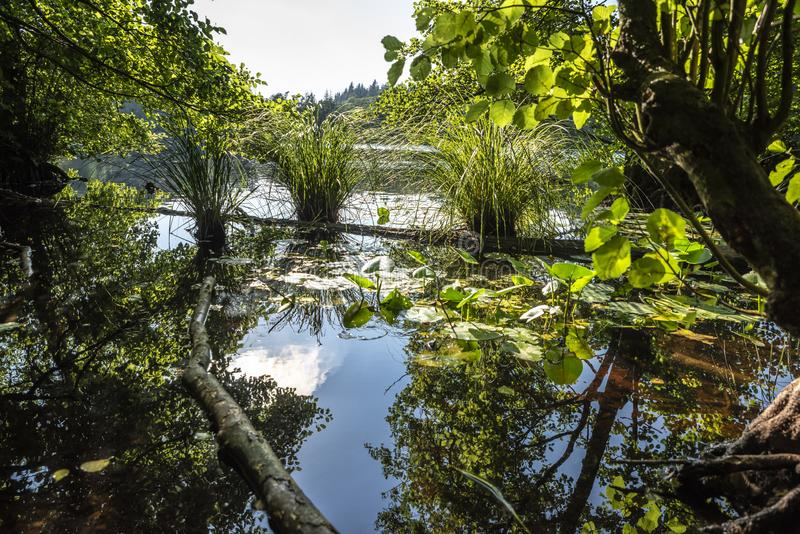 Mooie mening van een verborgen meer in het hart van het bos royalty-vrije stock afbeelding