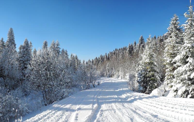 Mooie mening van het de de winterbos en landweg onder s stock afbeeldingen