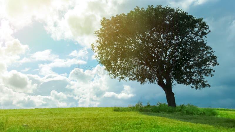 Mooie mening van het groene boom groeien op gebied onder bewolkte hemel, weervoorspelling royalty-vrije stock afbeelding
