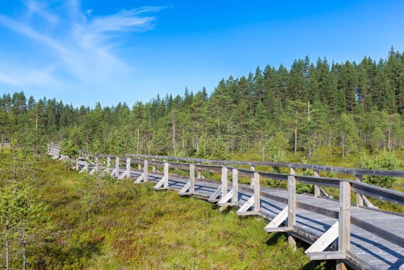 Mooie mening van Nationaal park in Finland Zonnige de zomerdag stock afbeeldingen