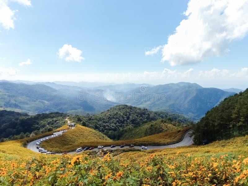 Mooie Mexicaanse zonnebloem op bergen in Thailand stock afbeelding
