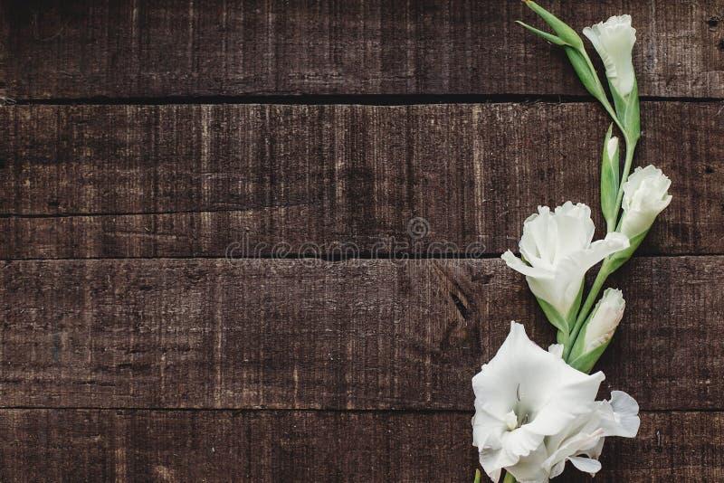 Mooie minimale witte gladiolen op rustieke houten achtergrond aan stock fotografie