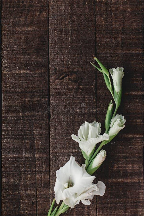 Mooie minimale witte gladiolen op rustieke houten achtergrond aan royalty-vrije stock foto