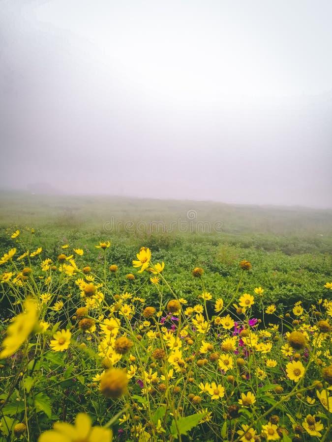 Mooie mistmening in lonavala, India Mooie bloemen stock foto