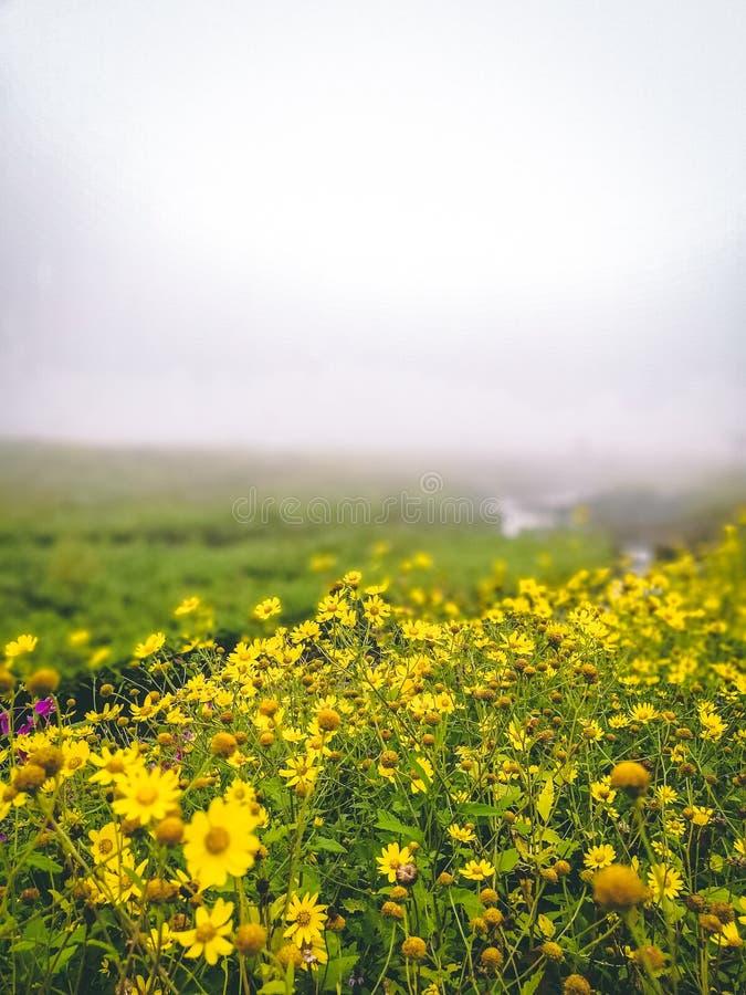 Mooie mistmening in lonavala, India Mooie bloemen stock fotografie