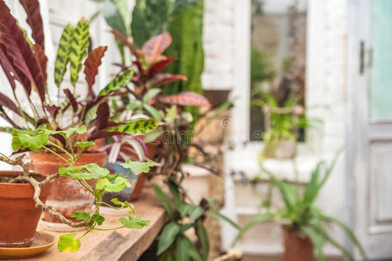 Mooie natuurlijke achtergrond van binneninstallaties, serres Stedelijke wildernis, een plaats voor rust en ontspanning Orchidee?n royalty-vrije stock fotografie