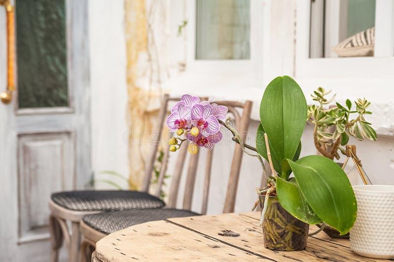 Mooie natuurlijke achtergrond van binneninstallaties, serres Stedelijke wildernis, een plaats voor rust en ontspanning Orchidee?n stock fotografie