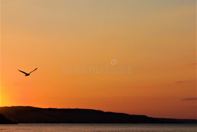 Mooie ochtendmeningen van het overzees bij dageraad met een vliegende vogel stock afbeelding