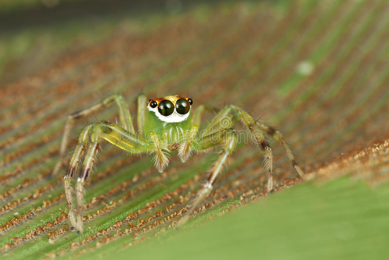 Mooie ogen die spin springen stock fotografie