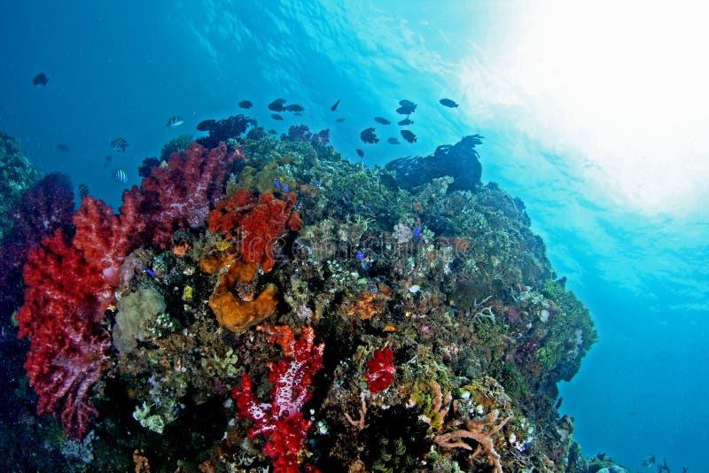 Mooie onderwatermening royalty-vrije stock afbeeldingen