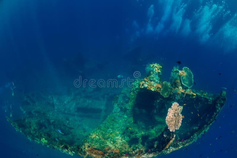 Mooie onderwatermening met bellen en koralen bij schipbreuk stock afbeeldingen