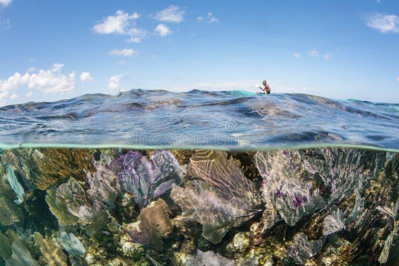 Mooie, Ondiepe Coral Reef in de Caraïbische Zee royalty-vrije stock fotografie